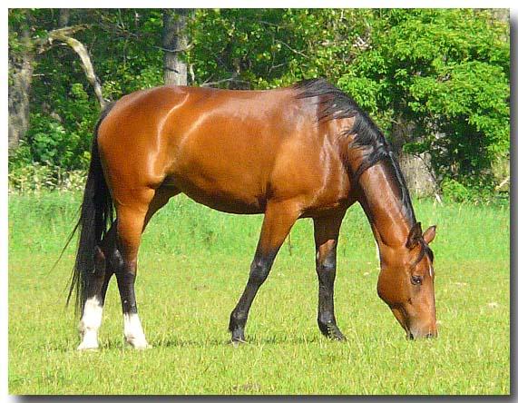 Fr gelenke haut fell atemsystem immunsysteml beim pferd pferd mit glnzendem fell auf koppel thecheapjerseys Images